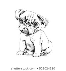 Pug Puppy Vector Black And White Illustration Baby Pugs Pugs