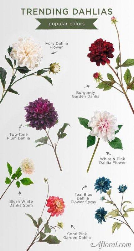 Dahlias Dahlia Flower Flower Chart Winter Flowers