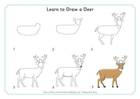 Pin By Ubbsi On Drawing And Painting Easy Animal Drawings Deer