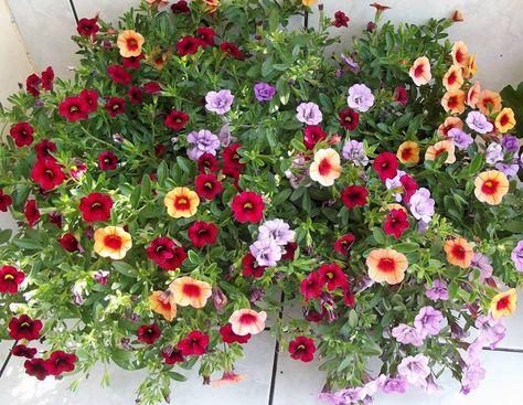 Pomysl Na Kwiaty Balkonowe W Donicy Oczywiscie Na Hydroboxie
