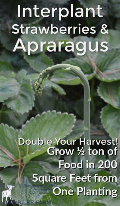Organic Gardening Encyclopedia Organic Gardening And Farming