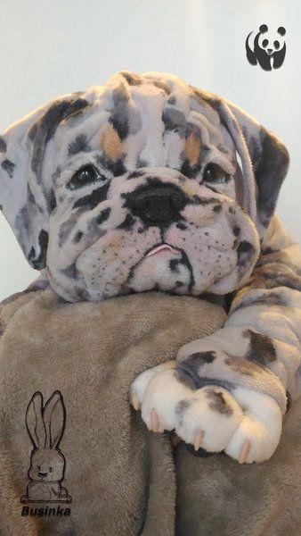 Barbados Koala Paws By Olga Ageenkova Businka In 2020 Cute Baby Animals English Bulldog Puppies Baby Animals