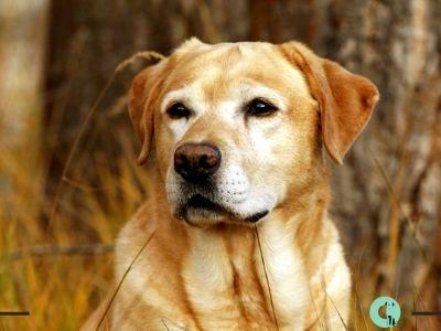 Pin En Perros Y Veterinarios