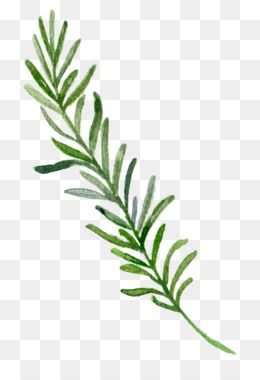 Leaves Png Leaves Transparent Clipart Free Download Euclidean