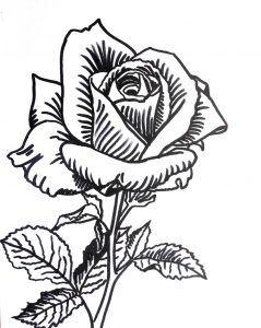 rysunek róża, szkic kwiat | Watercolor paintings easy, Flower drawing,  Drawing inspiration