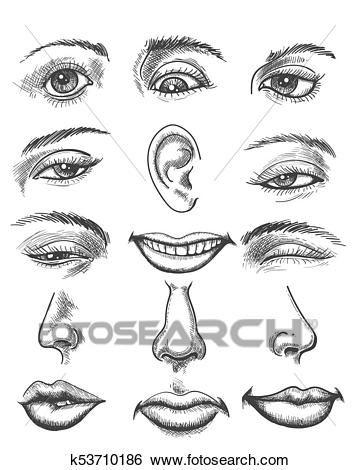 Vendimia Bosquejo Cara Humana Partes Clip Art K53710186 Bosquejo De La Cara Rostros Humanos Bosquejos