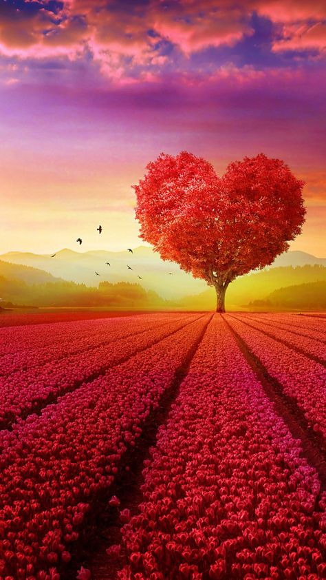 Love Heart Shape Tree Flowers HD Mobile Wallpaper.