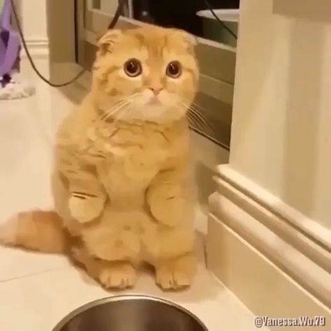 """@discover.cats on Instagram: """"Best compilation ever 😂"""""""