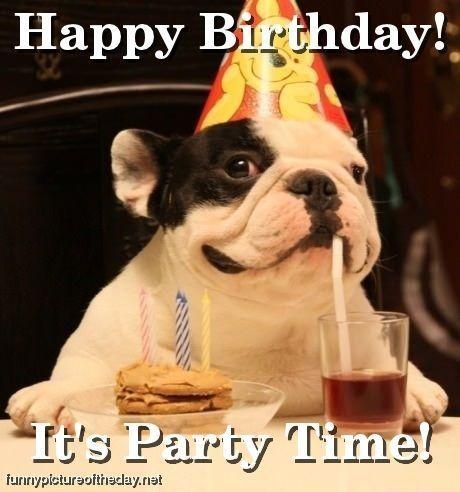 Happy Birthday Funny Dog Party Time Alles Gute Zum Geburtstag