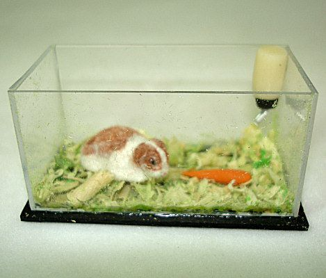 Pin On Miniature Pet Stores Pets Animals