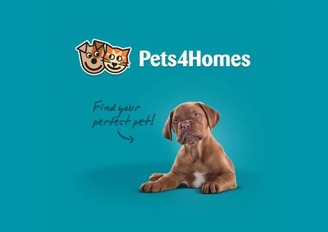 Pets4homes Is The Uks Most Popular Free Pet Classifieds And