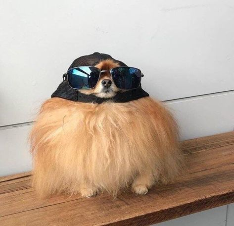 21 Dogs Looking Dapper In Hats | CutesyPooh