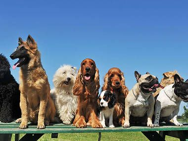 The Best Dog Parks In Sydney Dogs Best Dogs Dog Breed Selector