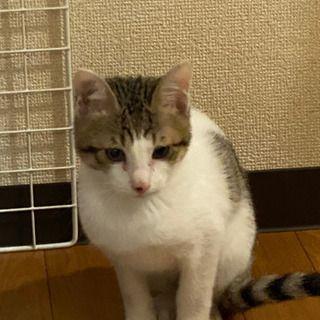 子猫生後3ヶ月くらい あんたま 観月橋の猫の里親募集 ジモティー 里親 猫 子猫