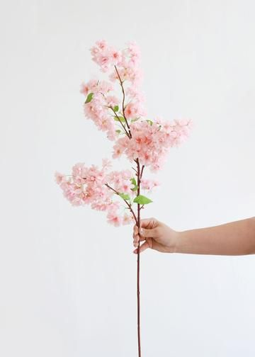 Results For Flowers Pink Cherry Blossom Flowers Cherry Blossom Branch Blossom Flower