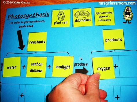 Photosynthesis and respiration cycle equation google search agr photosynthesis and respiration cycle equation google search agr 180 pinterest photosynthesis and equation fandeluxe Gallery