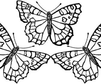 Free Butterfly Coloring Pages Coloring Pages Coloring Ideas