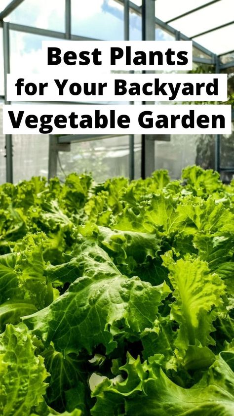 Quick Growing Vegetables That Will Deliver a Fast Harvest
