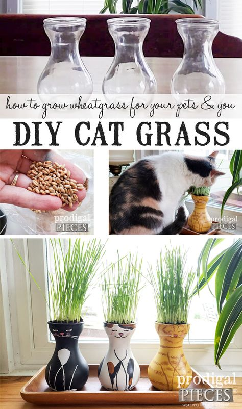 DIY Cat Grass Tutorial for Cats, Dogs, & You - Prodigal Pieces - How to Grow Cat Grass (aka. Wheat Grass) for your Cats, Dogs, and YOU. Video tutorial by Larissa of Prodigal Pieces Diy Pet, Diy Cat Bed, Diy Cat Toys, Growing Wheat Grass, Cat Grass, Cat Garden, Cat Room, Animal Projects, Cat Supplies