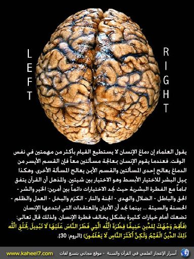Pin By To Understand The Meaning Of L On What Does Life Mean Brain Food Food Chocolate Cookie
