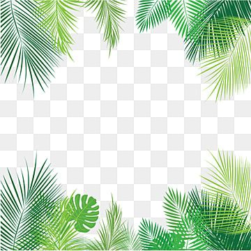 Tropical Palm Leaves Png Png Free Download Palm Tropical Leaves Leaves Png And Vector With Transparent Background For Free Download Watercolor Flower Background Banner Template Photoshop Spring Flowers Background