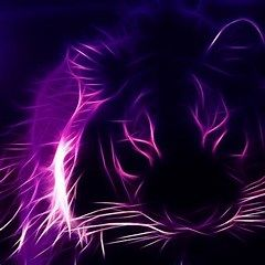 4k Ultra Hd Wallpaper Purple Purple Wallpaper Purple Cat Purple Backgrounds