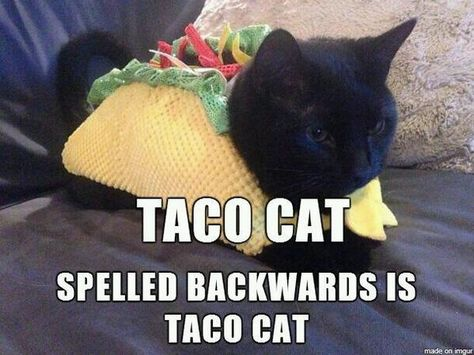 The relevance of this is none... but how cute is that kitty?!
