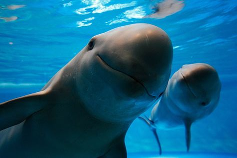 254 best Dolphins♛レ O √ 乇❥ images on Pinterest Dolphins - marine mammal trainer sample resume