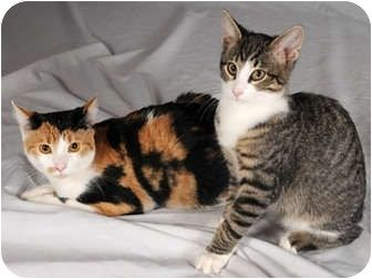 Ralphie And Allie Are Best Friend Kittens From Chicago Looking For