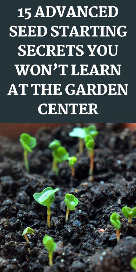 Garden Yard Ideas, Veg Garden, Diy Garden Projects, Garden Seeds, Garden Care, Vegetable Gardening, Garden Plants, Growing Greens, Growing Veggies