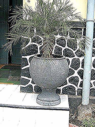 Gambar Pot Bunga Yg Bagus Pot Ukuran Sedang Hiasan Taman Rumah