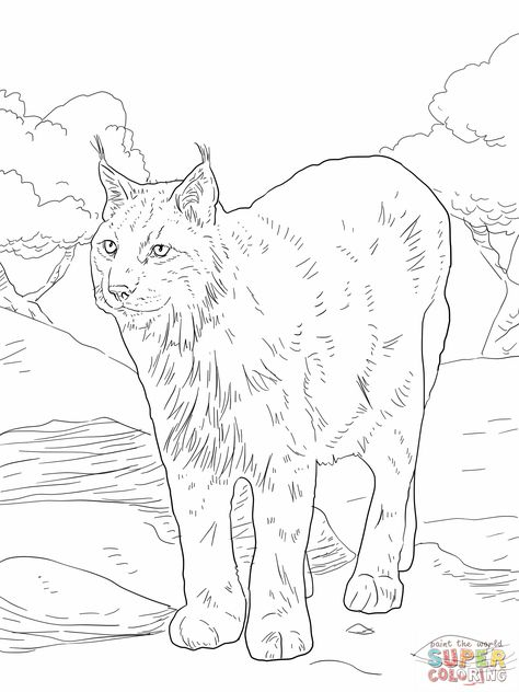 Realistic Bobcat Coloring Page