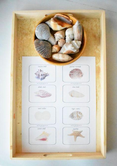 Montessori-Inspired Shelf Activities at 2.5 Years - Teacher and the Tots