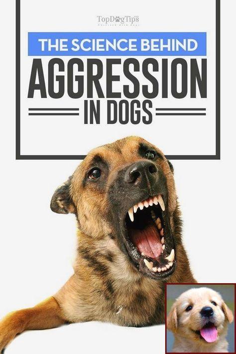 Dog Behavior Courses Uk And Dog Behavior College Dog Training Techniques Dog Training Near Me Dog Training