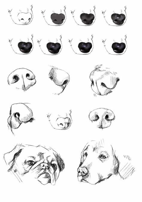 17 Draw Animal Noses Ideas Animal Noses Animal Drawings Dog Nose