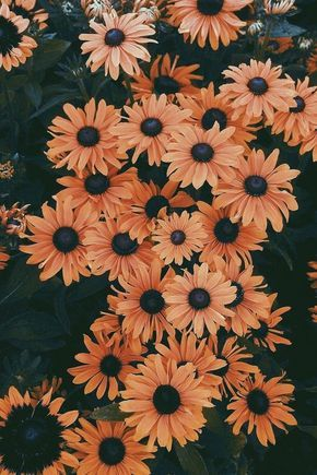 50 Beautiful Flower Wallpapers For Iphone Free Download Flower Iphone Wallpaper Cute Fall Wallpaper Sunflower Wallpaper Asthetic flower cute wallpaper iphone