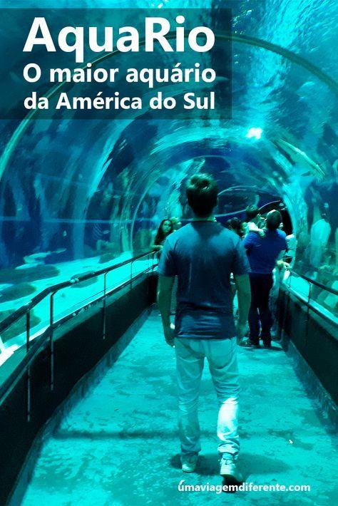 Aquario O Maior Aquario Da America Do Sul America Do Sul