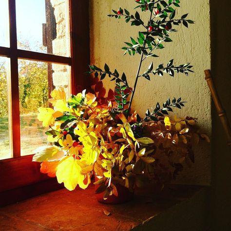 foglie #buonadomenica #autumn #foglie...