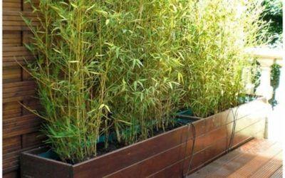 14+ Bambou fargesia en jardiniere ideas in 2021