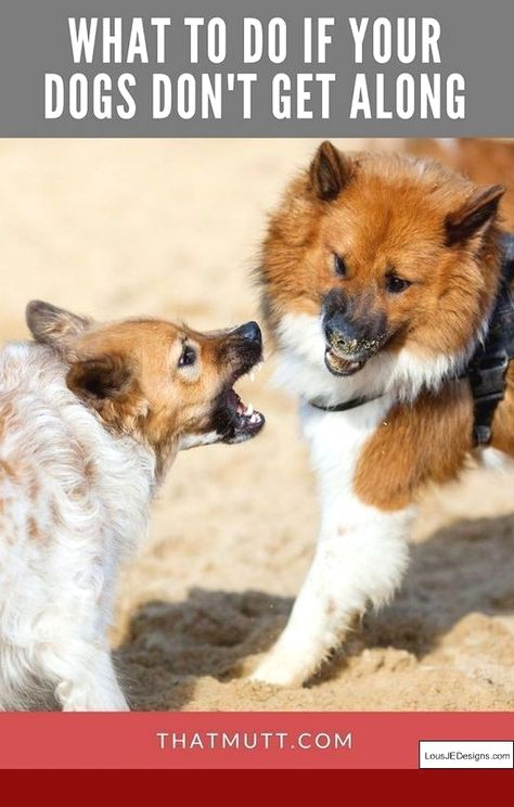 how to train a dog to not be aggressive
