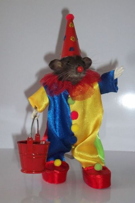"Anthropomorphic Taxidermy Mouse & Rat ""CLOWN"" Created by My Pest Friends Cute Little Animals, Baby Animals, Funny Animals, Animal Memes, Cute Rats, Clowning Around, Mood Pics, Reaction Pictures, Taxidermy"