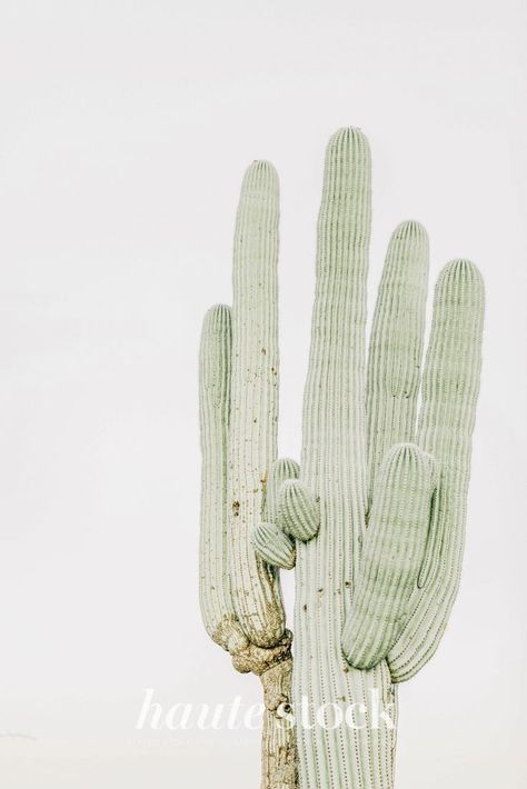 Serene, calm, meditative, peach & sage green desert health & wellness images featuring desert plant image. #hautestock #lifestyle #health #wellness #fitness #femaleentrepreneur #business #branding #marketing