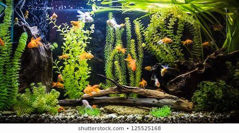 Free Printable Aquarium Backgrounds Fresh Aquarium Background Stock S Vectors In 2020 Aquarium Backgrounds Freshwater Aquarium Custom Aquarium
