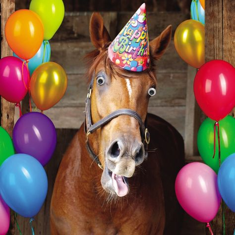 TOP 47 Funny Horse Pictures
