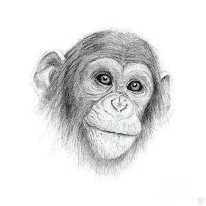 monkey jungle drawing a