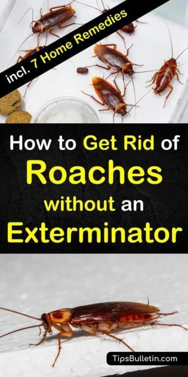 8 Super Simple Ways To Get Rid Of Roaches Without An Exterminator Roaches Home Remedies For Roaches Best Pest Control