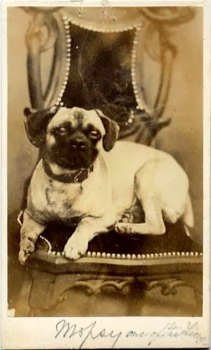 A Victorian Gent And His Dog In 2020 Pugs Pug Photos Pugs And
