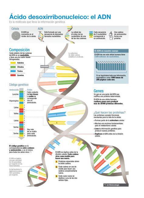 Pin En Genética