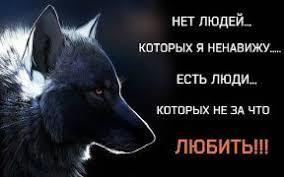 Kartinki Po Zaprosu Volk Odinochka Mudrye Citaty Citaty Mudrye