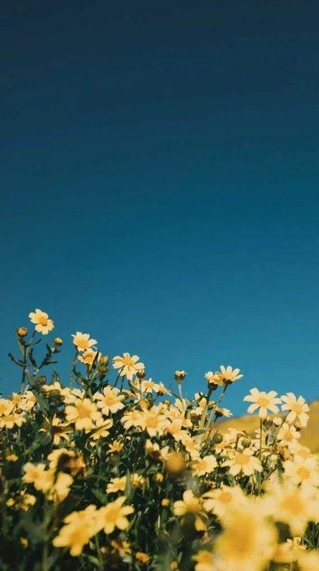 Pin By Lk 17 On Flower S In 2020 Flower Iphone Wallpaper Iphone Wallpaper Tumblr Aesthetic Iphone Minimalist Wallpaper